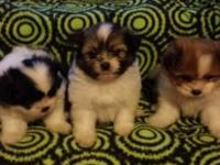 We have 5 puppies searching for new houses on 9/2/14.