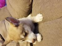 have five female and one male pomskies. They have had