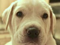 Meet Ponch! He is one of TWELVE in his litter and is