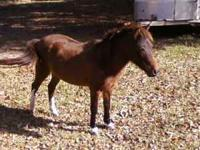 Ponies and Horses for sale. Ready to ride, some of the