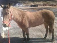 This is one great Pony. Dixie is 21 years old my kids