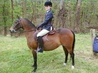 Pony - Amber - Medium - Young - Female - Horse This