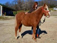 Pony - Artax - Large - Young - Male - Horse Artax is a