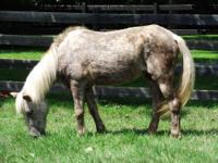 Pony - Cinnamon - Small - Senior - Female - Horse