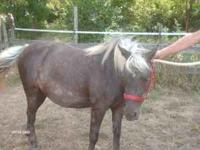 FOR SALE large pony mare, approx 8 years old, very