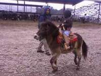 good pony for sale need to get rid of it... please call