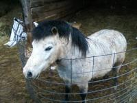 Pony - Junior - Medium - Young - Male - Horse My name