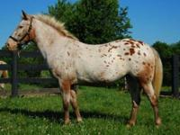 Pony - Lucy - Medium - Adult - Female - Horse Lucy is a