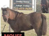 Pony - Mouse - Medium - Adult - Male - Horse Have you