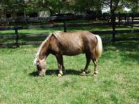 Pony - Nemo - Small - Senior - Male - Horse Nemo is one