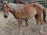 Pony - Rey - Medium - Young - Female - Horse REY 2007
