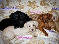 I have 7 puppies available all very friendly! Shots and