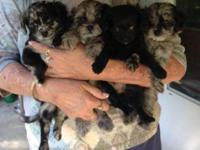 We have three super adorable puppies left and they are