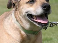 Poodle - Palooza - Medium - Senior - Female - Dog