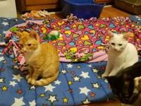 Pooh came to us with his other kitten siblings from a