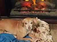 My story POOKIE is a gentle, sweet, shy girl. She is up