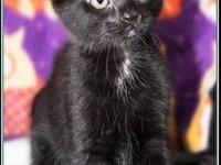 POP's story $97.50 FEE INCLUDES: neutering/spaying,