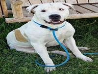 POPEYE's story Popeye is a 3-year-old, intact male,