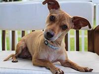 Poppi's story Poppi, a 2 year old terrier mix, came to