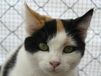 Poppy is a petite, young calico with gorgeous green