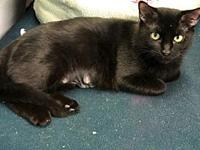 Poppy's story Pretty and sweet Adult DSH Black Female