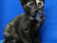 Poppy's story I'm Poppy, ad adorable kitten with the