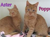 Poppy's story Aster & Poppy are sisters who had bad eye