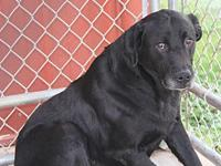 Poppy's story Poppy is a handsome 10-year old male