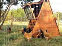 These wonderful, portable handcrafted chicken coops