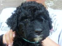 This little fellow is Bentley, He is a F1 generation
