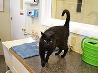 Possum's story Hi, I'm Possum. I was brought to FFAA