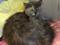 Pot-O-Gold, a very pretty pastel torti, was rescued as