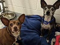 Potter & Coco's story All of our adoptable pets are