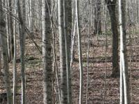 Powhatan ... 11 really ideal 2.5 to 4.5 acres lots to
