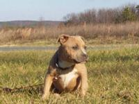 If you want a nice bully with an awesome pedigree.This