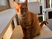 My story Prada is an adorable kitten looking for a