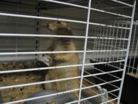 Baby Prairie dogs have arrived!. Males and females will