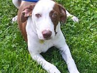 Praline's story You can fill out an adoption