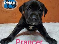 My story Prancer was born in foster care (in Milford