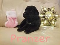 Pranzer's story     Thank you for checking