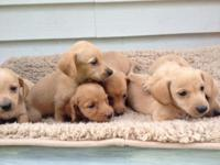 These happy wagging tails were born on Memorial Day .