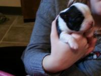 Puppies born November 12 th, 2014 ... meanings that