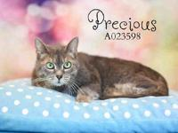 PRECIOUS's story Hello! I am new to the shelter! Please