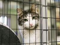 Animal Adoption application can be filled out at the