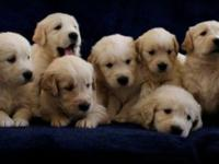 We have 6 available puppies available out of a