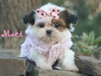 For more info on my adorable imperial size shihtzu