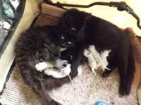 I have 11 kittens in total to two different mothers