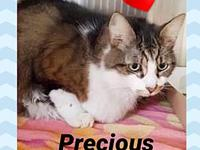 Precious's story ** Contact info: email