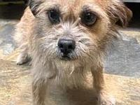 My story Precious is an adorable 3 year old terrier
