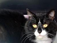 Preed *Special Adoption Fee's story I'm 4 years old! I